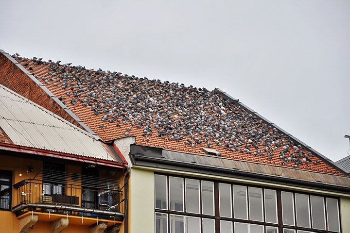 A2B Pest Control are able to install spikes to deter birds from roofs in Southall Broadway.
