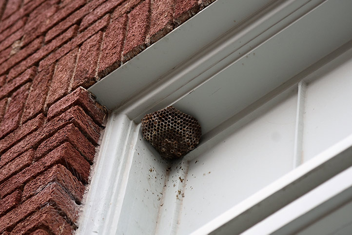 We provide a wasp nest removal service for domestic and commercial properties in Southall Broadway.
